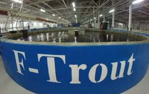 Trout Production Facility, Russia