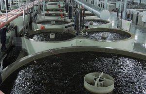 Catfish Production Facility, Slovakia