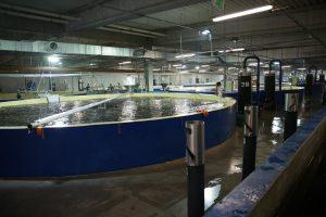 Salmon R&D Center Poland