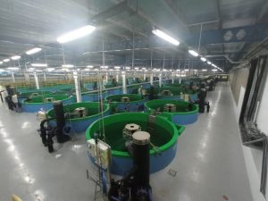 Grouper production facility, Far East